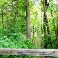 Wald Moosburg