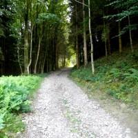 Trail von der Donau