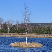 Hochmoorsee