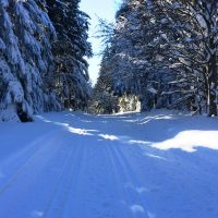 Haidel im Winter