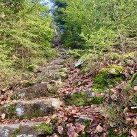 Bayerischer Wald, Nationalpark