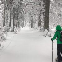 Winter Haidel