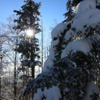 Schneeschuh Winterwald