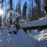 Schneeschuh Nationalpark