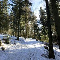 Oberfrauenwald Wald