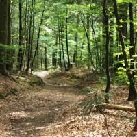 Ofrauenwald Trail