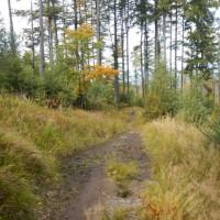 Pfad durch den Wald zum Rachel