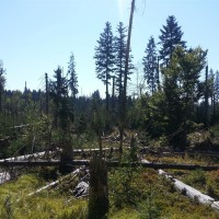 Nationalpark bei Neuhütte