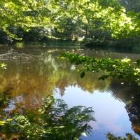 Teich Racheldiensthütte