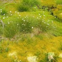 Flora und Fauna in den Schachten
