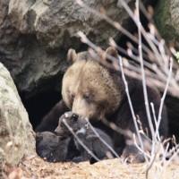 Tierfreigehege Bär