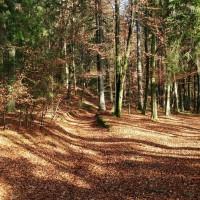 Trail durch den Wald