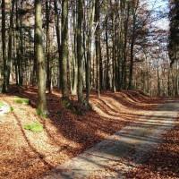 Waldweg Dreiburgensee