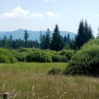 Blumenwiesen im Böhmerwald