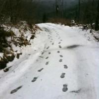 Lusen Winterwanderweg