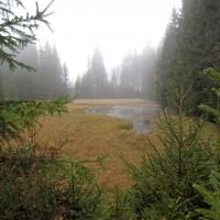 Hochmoor Holzschlag
