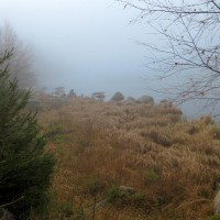 Plöckenstein See im Nebel