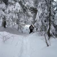 Durch den Winterwald mit Schneeschuh