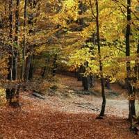 Wald Solla